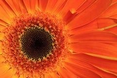 Macro fleur Photo stock