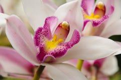 Macro fleur image libre de droits