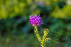 Macro fleur Photos libres de droits