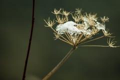 Macro fleur avec de la glace Images libres de droits
