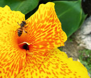 Macro fleur jaune Photos libres de droits