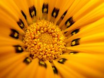 Macro fleur jaune Photos stock