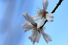Macro fleur sur un arbre Images stock