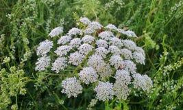 Macro fleurs images stock