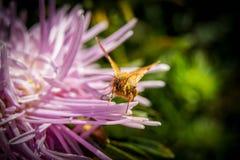 Macro fleurs un jour d'été par temps ensoleillé photos stock
