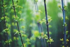 macro fleurs vertes molles Photo stock