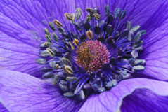 Macro Flora Stock Images