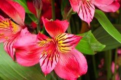 Macro Floral arrangement Stock Image