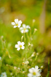 Macro floral background white tender spring flowers Stock Photos