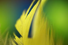 Macro flover abstract. In summer day Royalty Free Stock Images