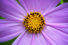 Macro of flower Stock Photo