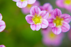 Macro flower Royalty Free Stock Images