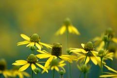 Macro Flower Royalty Free Stock Photography