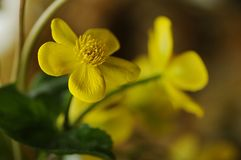 Macro flower. Macro view of yellow flower Stock Photography