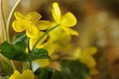 Macro flower. Macro view of yellow flower Stock Photo