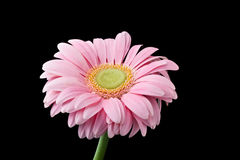 Macro flower background Stock Image
