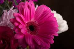 Macro of a flower Stock Photos