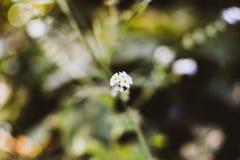 Macro flower blossom closeup nature. Portrait bokeh background royalty free stock image