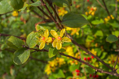 Macro flower. Macro, close up, detail of leaf rainy day Royalty Free Stock Image