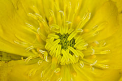 Macro flower  closeup yellow backgrounds Stock Photos
