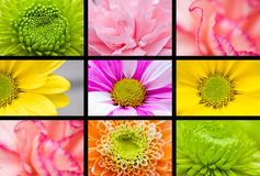 Macro flower collage Royalty Free Stock Photography