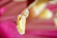 Macro flower core Royalty Free Stock Photo