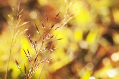 Macro flower. Macro dew drop reflection on magenta wild small flower Stock Photography