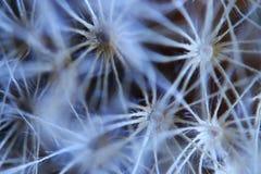 Macro flower gentle background Royalty Free Stock Image