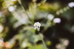 Macro flower green background royalty free stock image