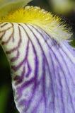 Macro of flower Royalty Free Stock Image
