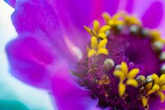Macro flower in the sunlight stock photo