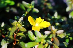 Macro flower. Under the sun Stock Photography
