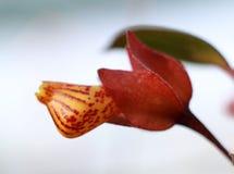 Macro flower. Under the sun Stock Photo