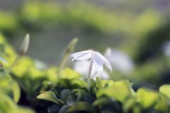 Macro flower. Under the sun Stock Images