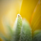 Macro of a flower using 50mm reverse lense Stock Image
