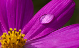 Macro Flower Water Drop Royalty Free Stock Photos