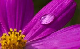 Macro Flower Water Drop Royalty Free Stock Photos