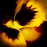 Macro flower in yellow Royalty Free Stock Images