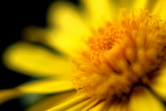 Macro flower. A yellow detail taken in macro mode royalty free stock photo