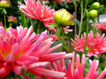 Macro Flowers Royalty Free Stock Photo