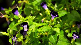 Macro flowers Stock Image