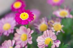 Macro of flowers II Stock Images