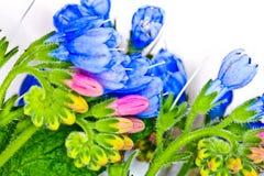 Macro  flowers nature Stock Photography