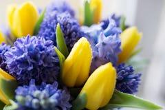 Macro flowers waterdrops stock photos