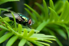 A macro of a fly Royalty Free Stock Photography