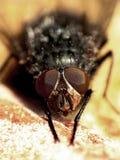 Macro of a fly stock photos