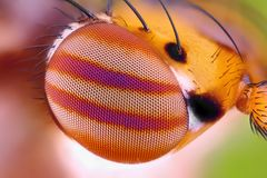 Macro fly compound eye at extreme magnification Royalty Free Stock Image
