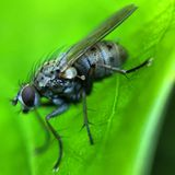 MAcro of a fly Royalty Free Stock Images