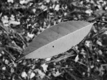 macro foglia dell'albero Fotografia Stock