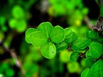 Macro foglie Fotografie Stock